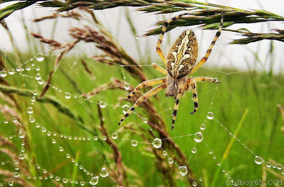 Deszczowa pajęczyna